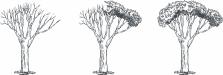 three trees seasonal